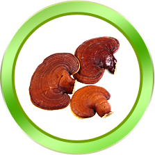 provailen-ingredient-reishi